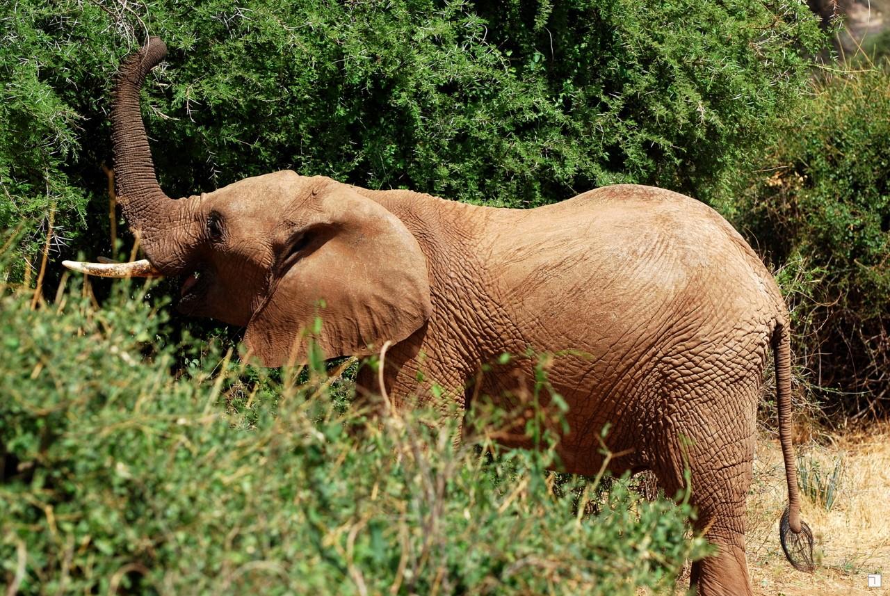 1-KENYA_2008-023