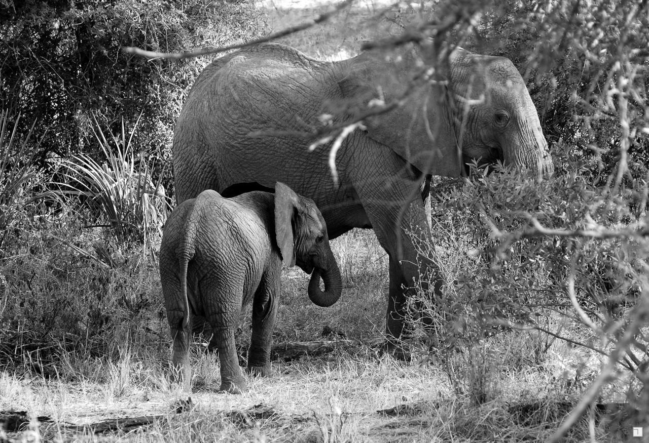 1-KENYA_2008-037