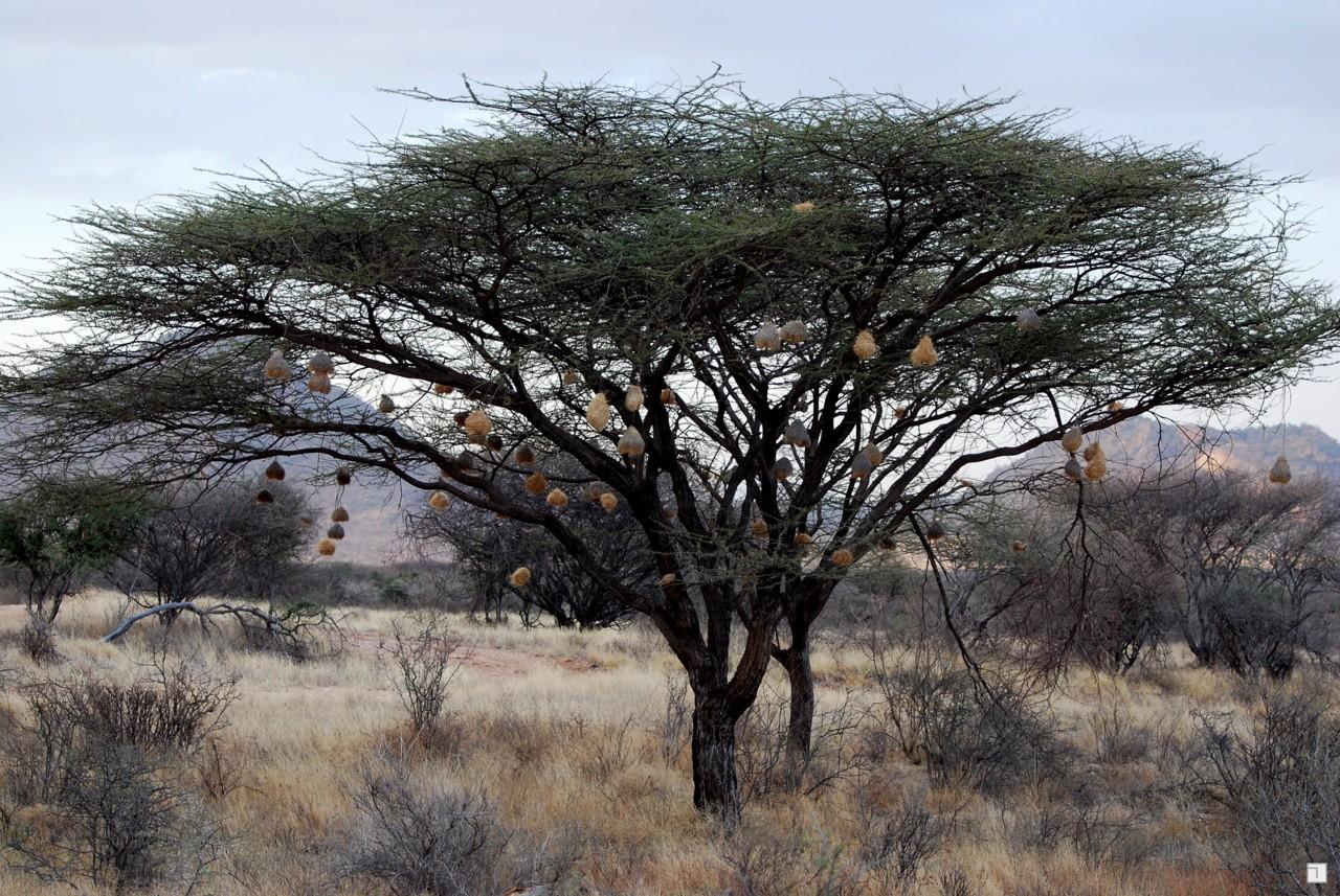 1-KENYA_2008-055