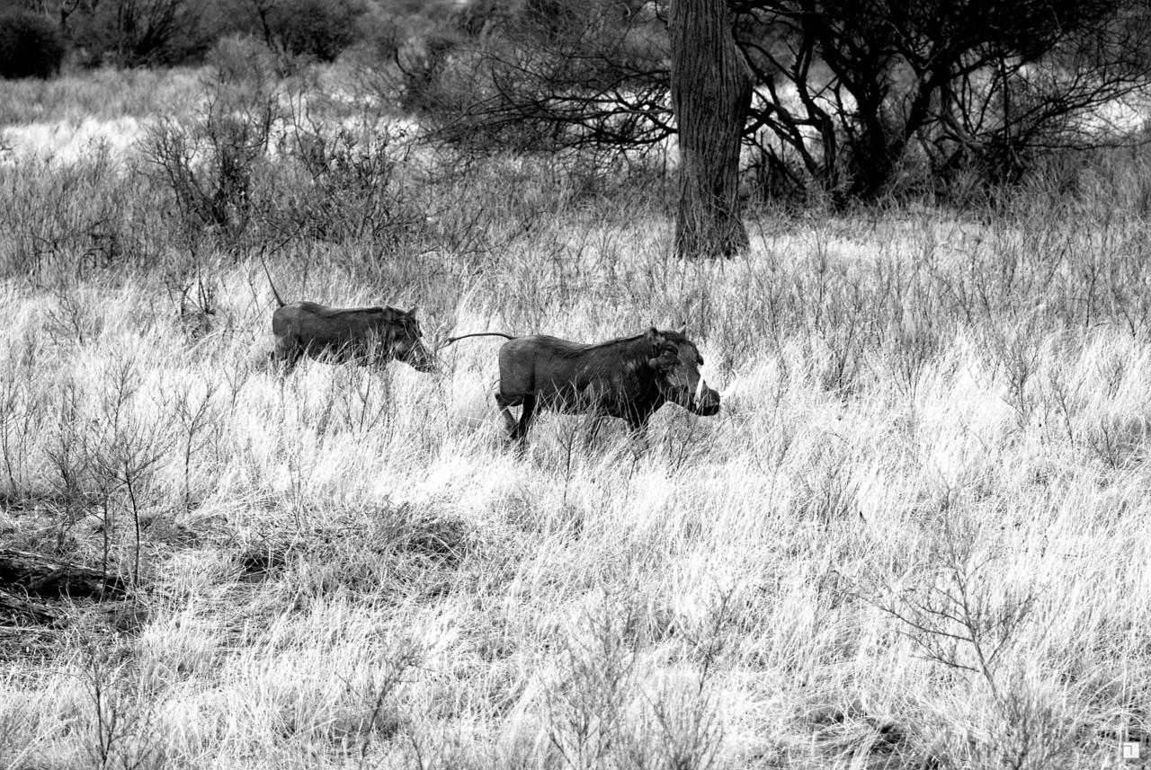 1-KENYA_2008-057