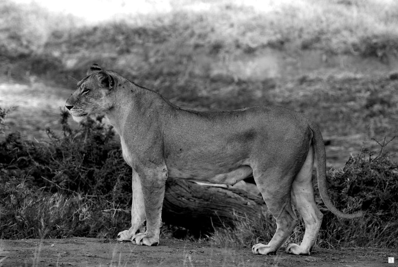 1-KENYA_2008-118