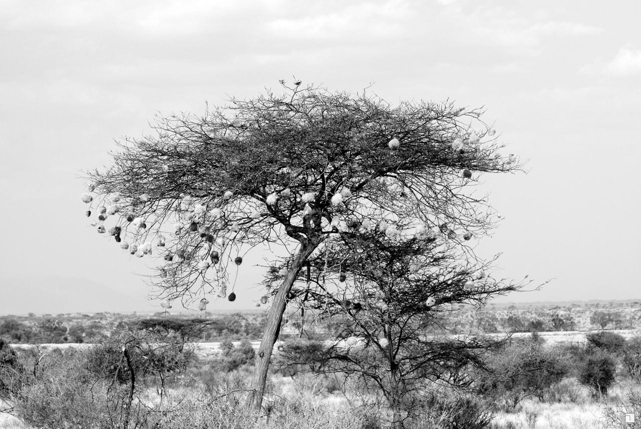 1-KENYA_2008-168