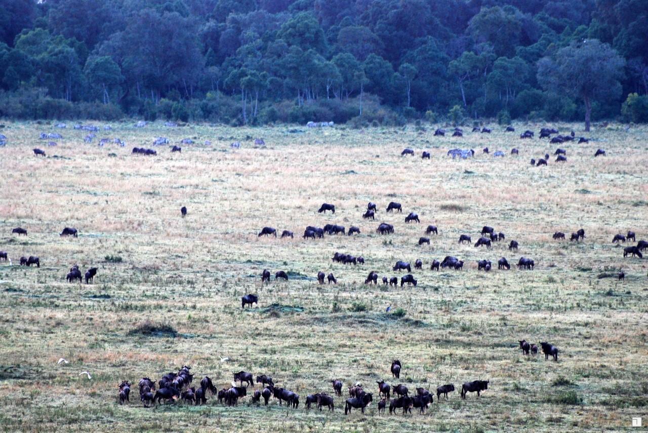 1-KENYA_2008-262