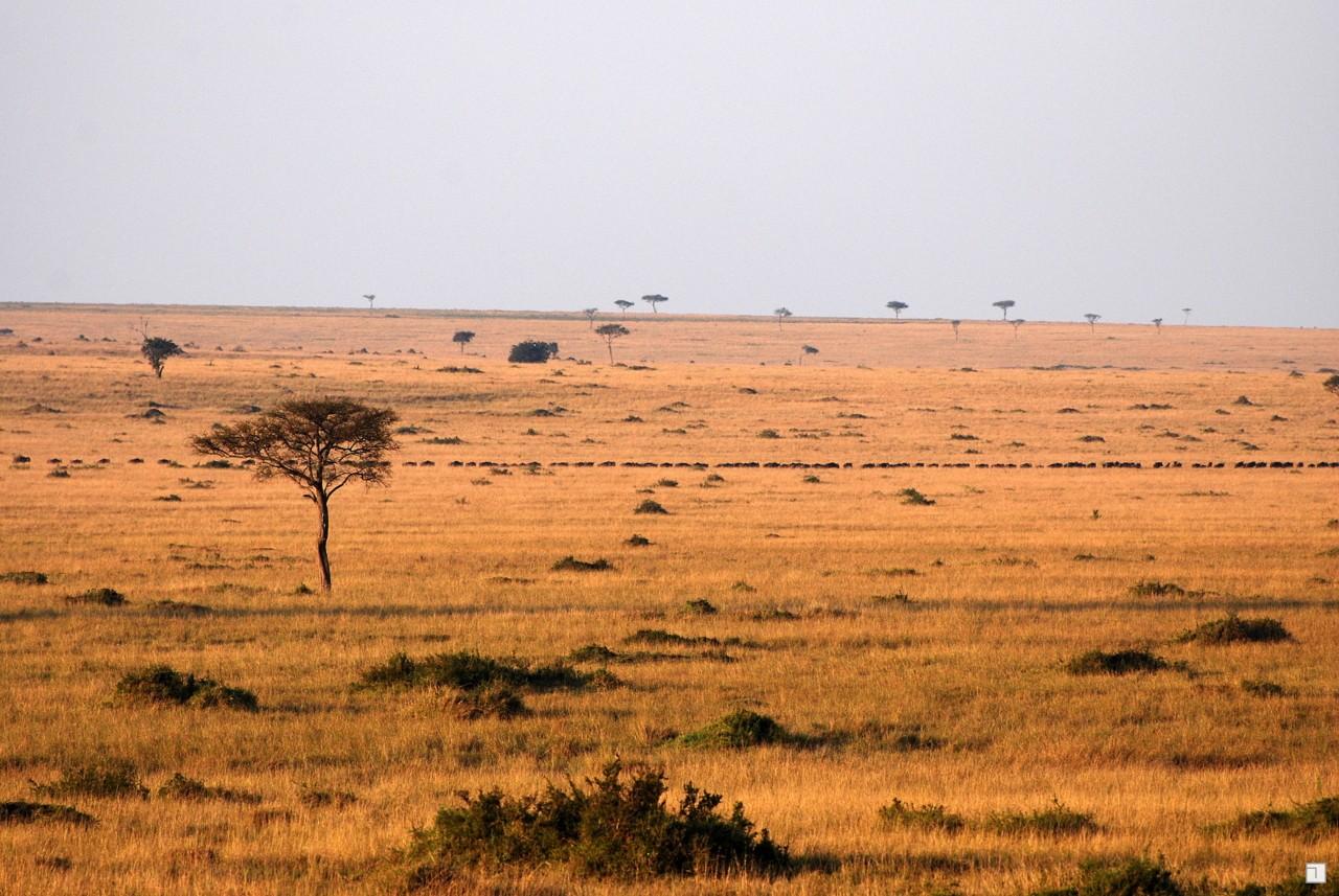 1-KENYA_2008-291
