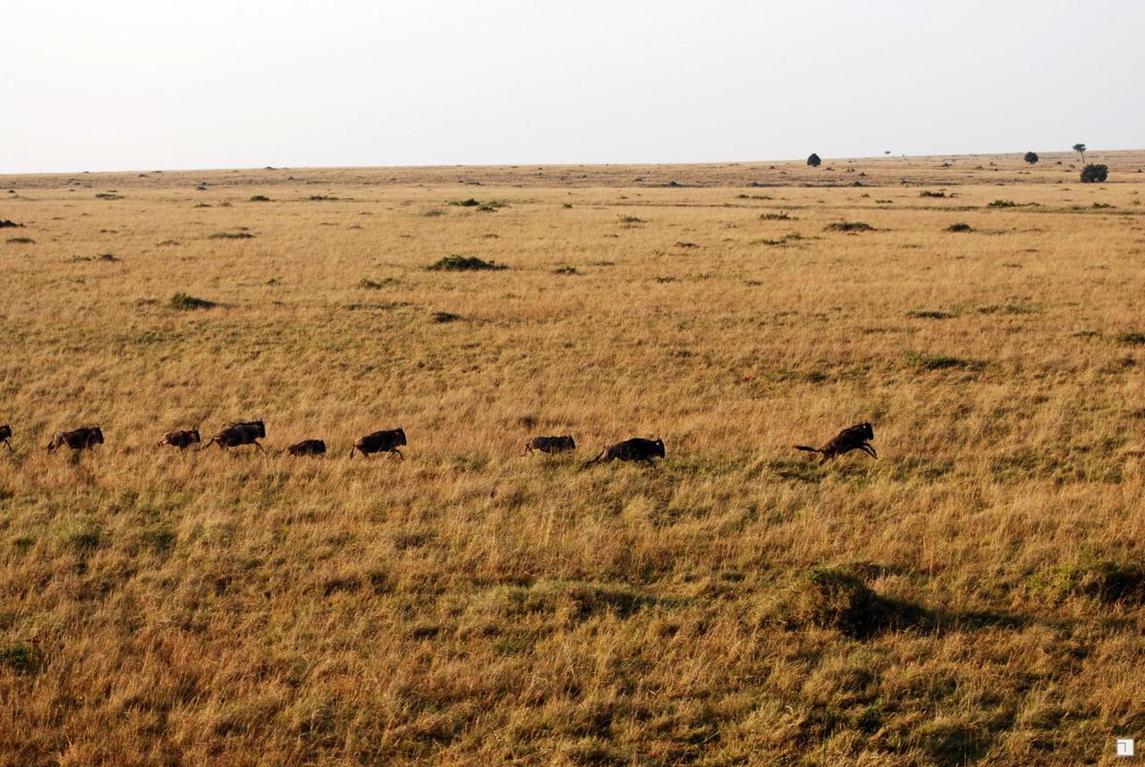 1-KENYA_2008-305