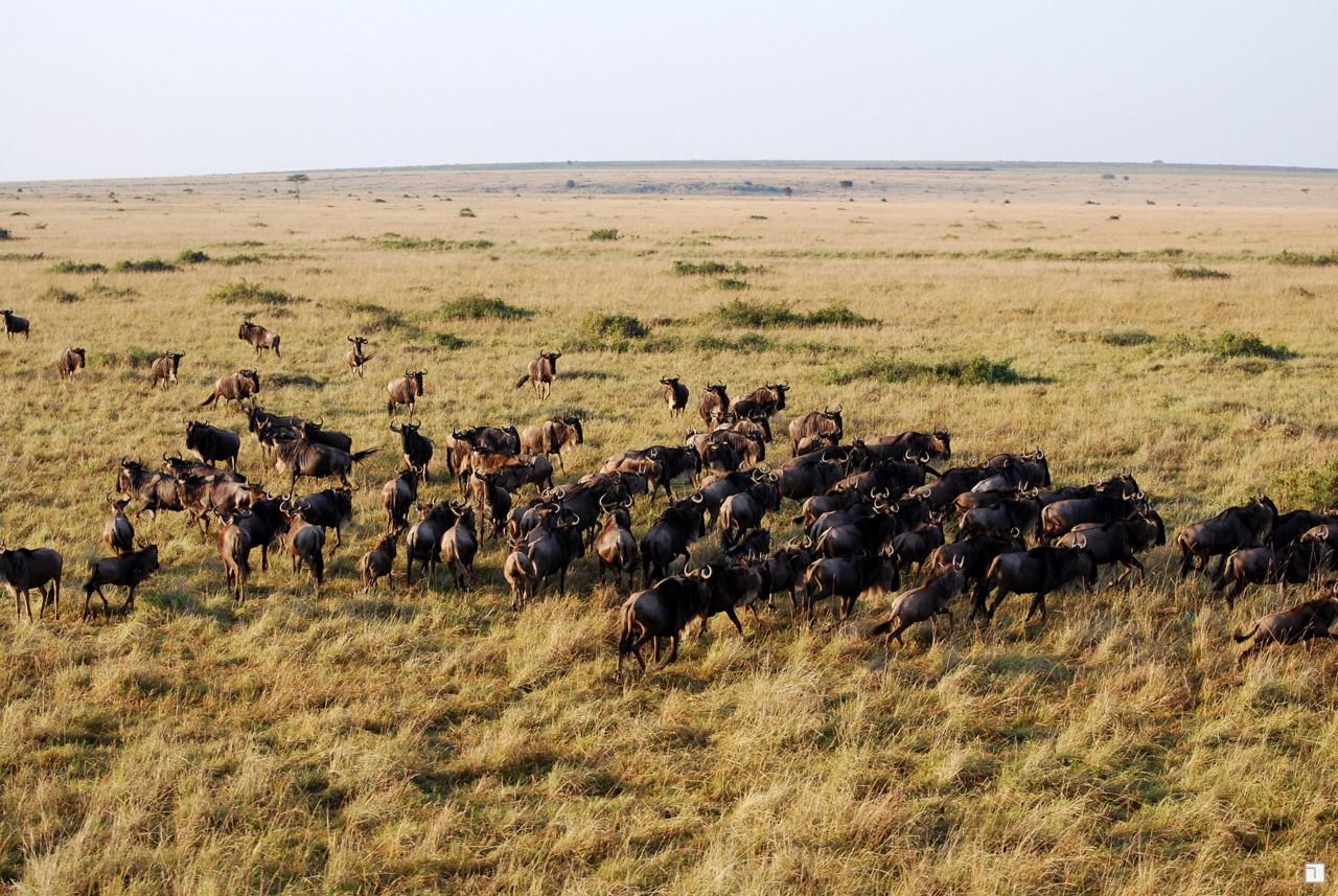 1-KENYA_2008-307