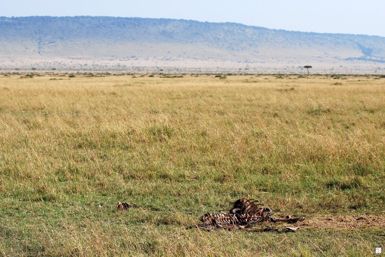 1-KENYA_2008-315