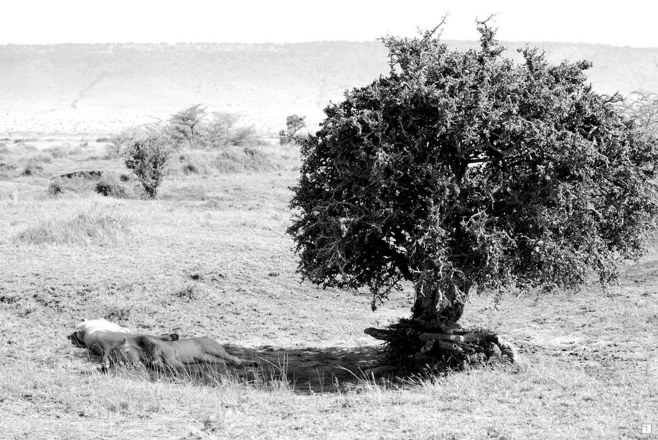 1-KENYA_2008-320