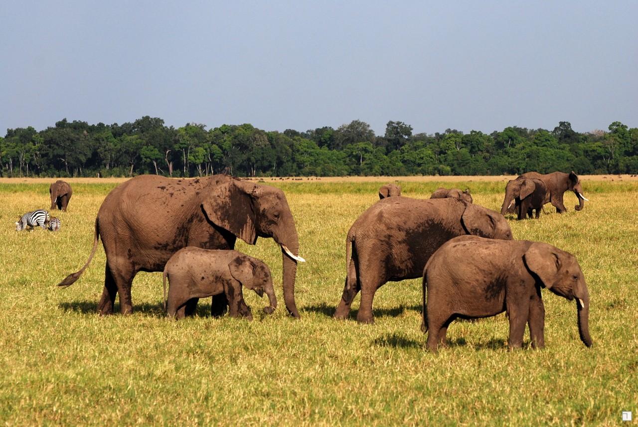 1-KENYA_2008-340