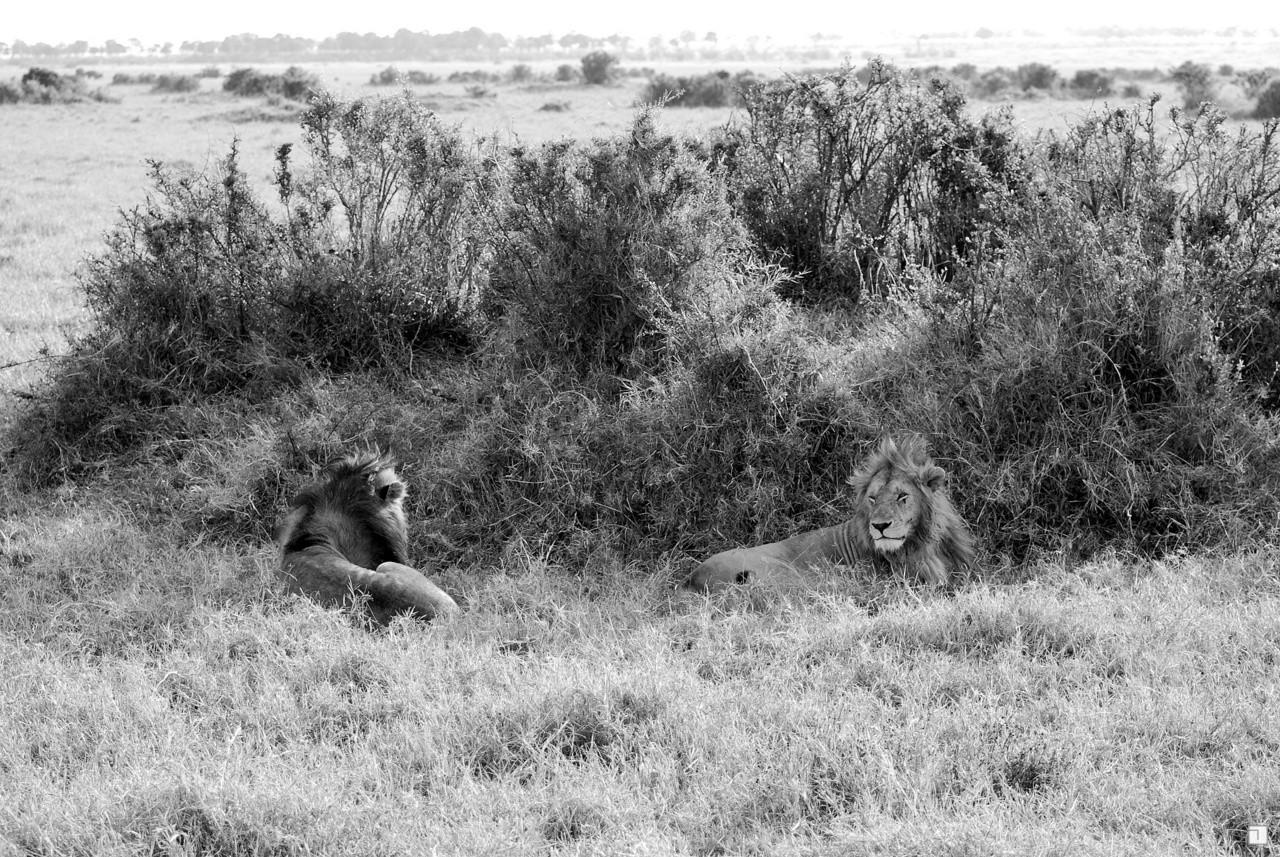 1-KENYA_2008-365