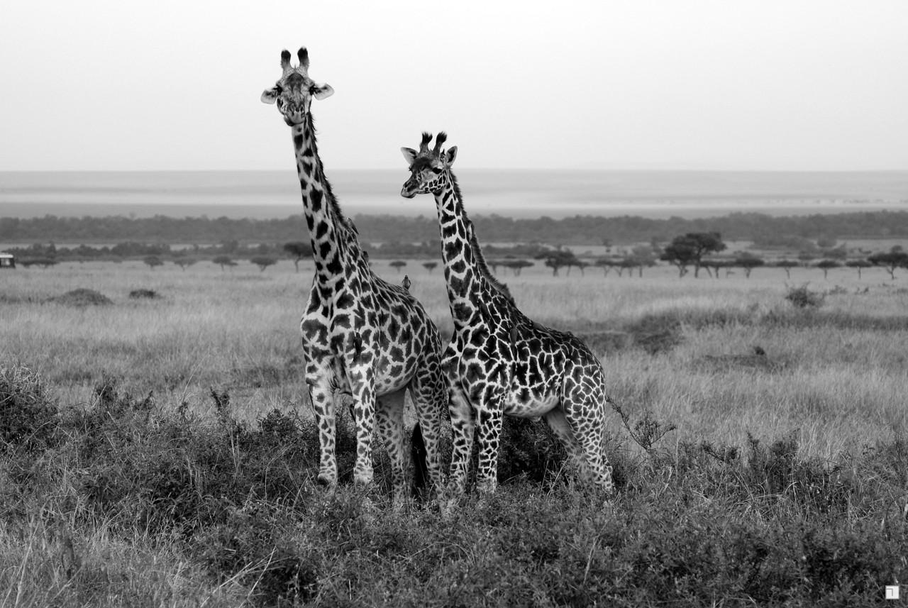 1-KENYA_2008-367