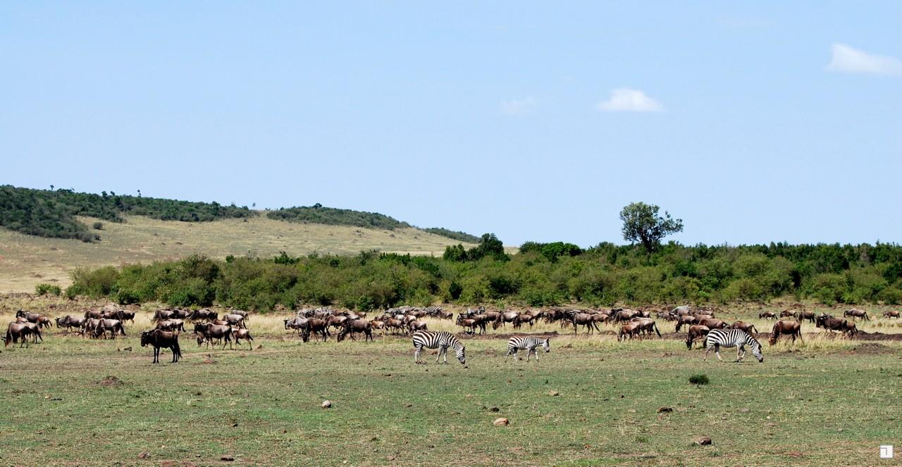 1-KENYA_2008-396