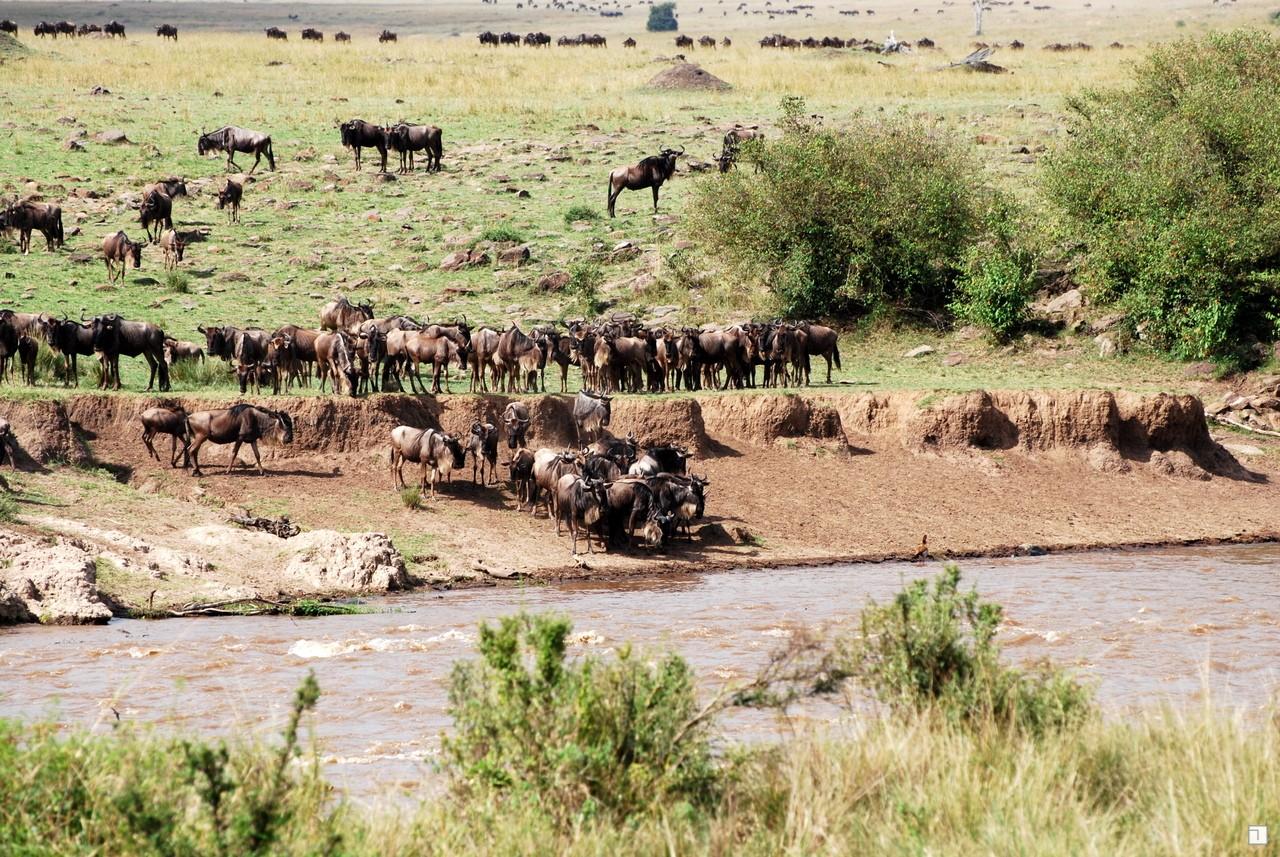 1-KENYA_2008-428